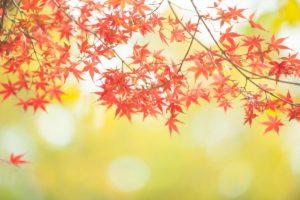 秋のリフォームがおすすめな理由